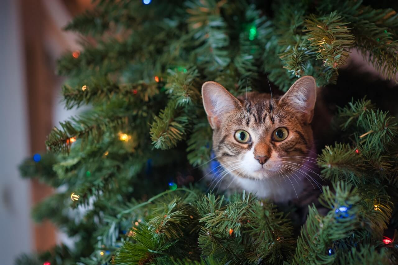 christmas-tree-cat