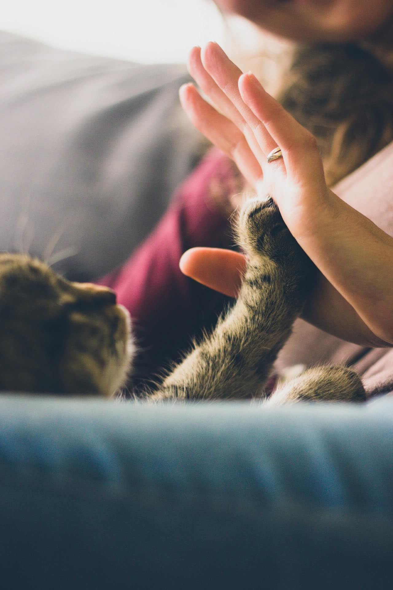kitten-high-five